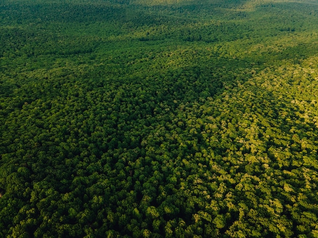 Vista aerea del bellissimo filmato della foresta pluviale tropicale nella giungla amazzonica della foresta amazzonica in brasile bra