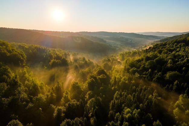 Vista aerea della mattinata nebbiosa luminosa sopra gli alberi della foresta scura all'alba calda di estate. splendido scenario di boschi selvaggi all'alba.
