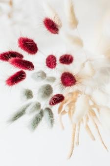 Vista aerea dell'erba di bunny tail in un vaso