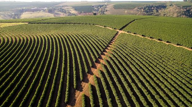 Piantagione di caffè vista aerea nello stato di minas gerais - brasile