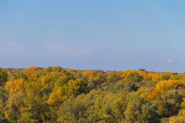 Vista aerea di alberi autunnali colorati. paesaggio autunnale