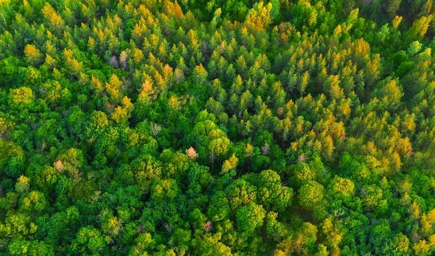 Vista aerea colorato verde estate foresta all'alba
