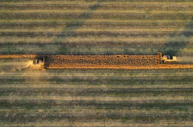 Vista aerea della mietitrebbiatrice che raccoglie grano al tramonto. bellissimo campo di grano.