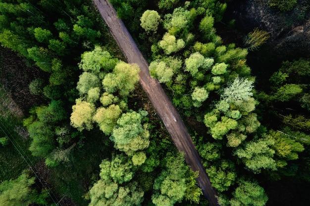 Vista aerea della strada di campagna attraverso il paesaggio della natura della foresta di pini