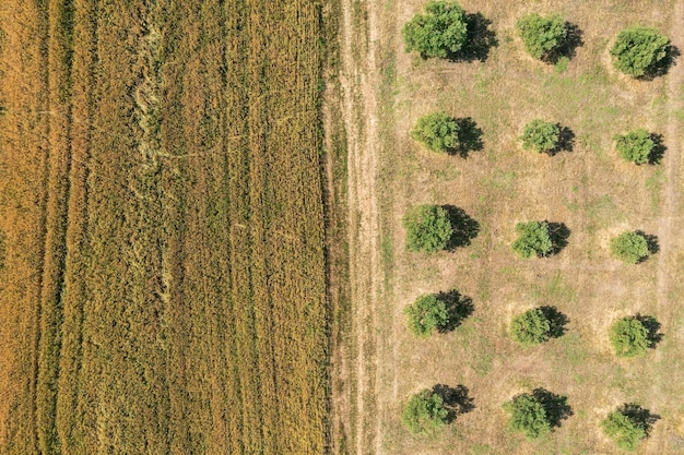 Veduta aerea della campagna divisa in parti uguali con un campo e un uliveto