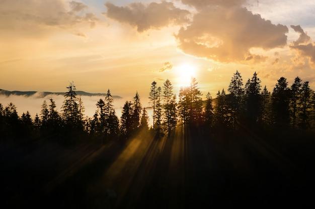 Vista aerea di pini verde scuro nella foresta di abete rosso con raggi di alba che splendono attraverso i rami nelle nebbiose montagne autunnali.