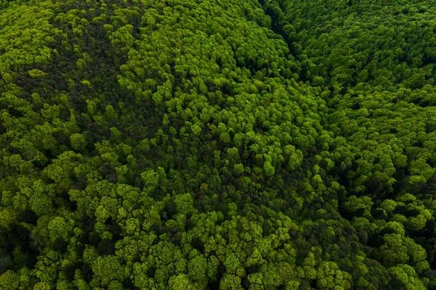 Vista aerea di pino misto scuro e foresta lussureggiante con tettoie di alberi verdi.