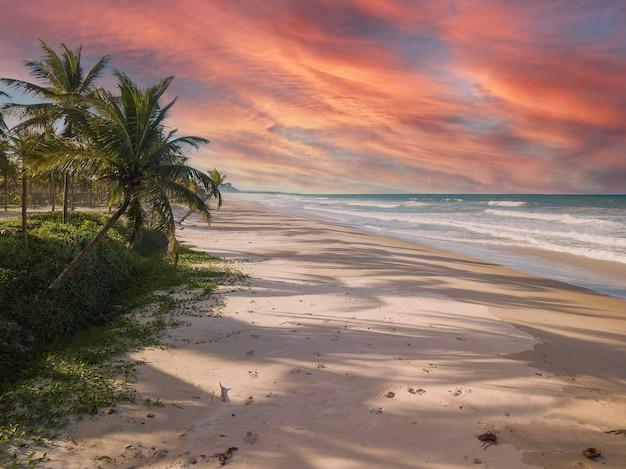 Vista aerea spiaggia deserta con palme da cocco sulla costa di bahia brasile.