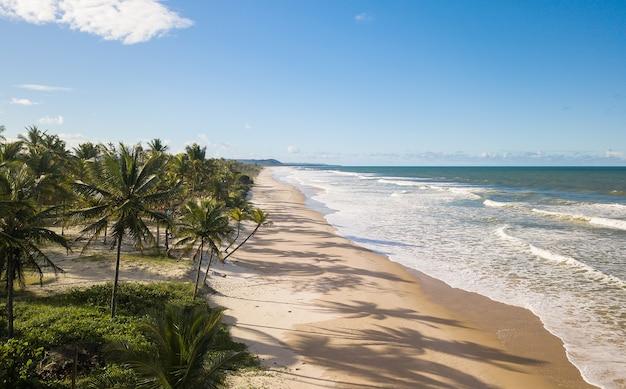 Vista aerea spiaggia deserta con alberi di cocco sulla costa di bahia brasile.