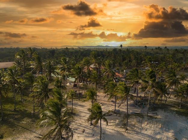 Vista aerea spiaggia deserta con palme da cocco. ilheus bahia brasile.