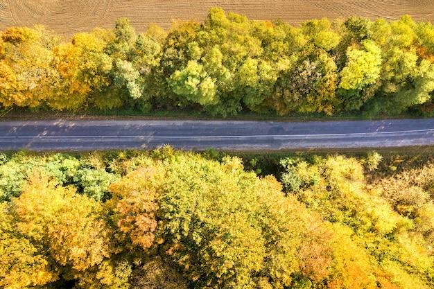 Vista aerea della strada vuota tra alberi gialli di caduta