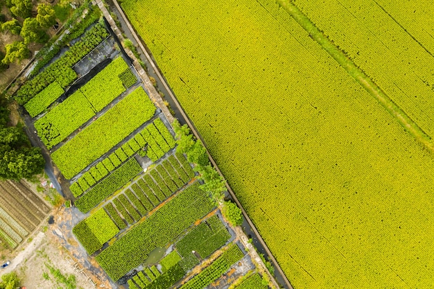 Vista aerea della fattoria con riso o verdura a taiwan