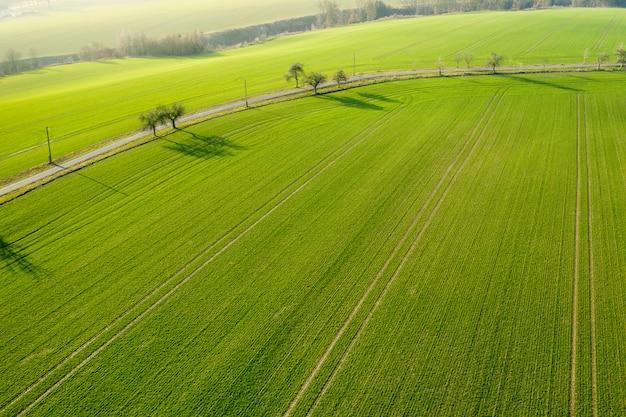 Vista aerea su un campo con erba verde e pochi alberi lungo una strada.