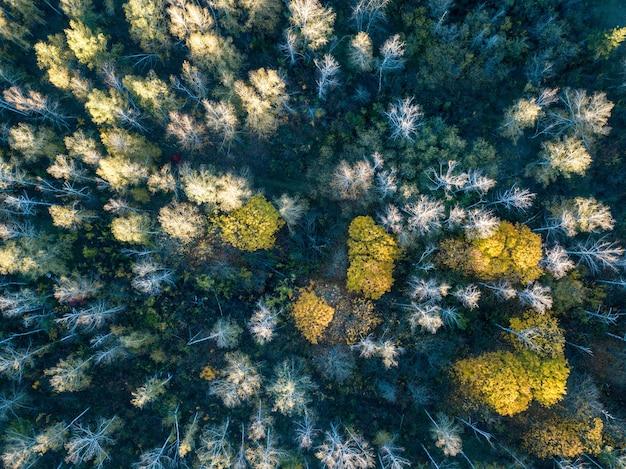 Vista aerea della foresta in autunno con fotografia di droni di alberi colorati