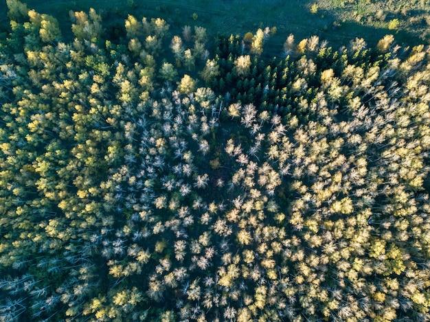 Vista aerea della foresta in autunno con alberi colorati. fotografia con droni.