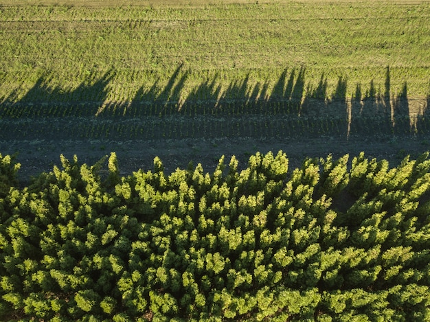 Foresta di vista aerea e campo verde, riflesso delle ombre sul campo verde
