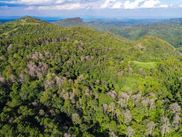 Vista aerea foresta albero ambiente foresta natura sfondo, texture di albero verde vista dall'alto foresta dall'alto, pino e foresta di bambù sfondo di montagna