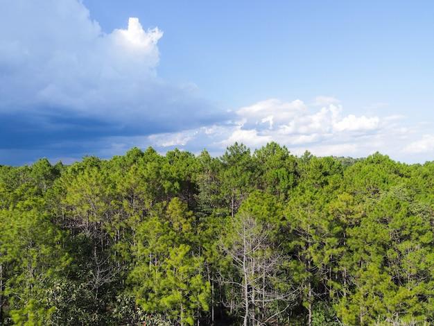 Vista aerea foresta albero ambiente foresta natura cielo blu sfondo, texture di albero verde vista dall'alto foresta dall'alto paesaggio uccello occhio vista foresta di pini asiatico