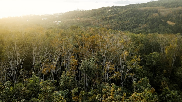 Una veduta aerea della foresta.
