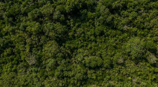 Vista aerea da drone della foresta pluviale in thailandia, sullo sfondo della natura