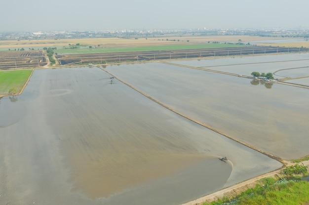 Vista aerea da volare drone di riso field con paesaggio verde modello sfondo natura, riso campo vista dall'alto