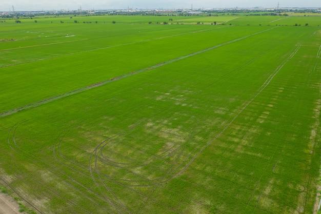 Vista aerea dal fuco di volo del riso del campo con il fondo della natura del modello di verde del paesaggio, riso del campo di vista superiore