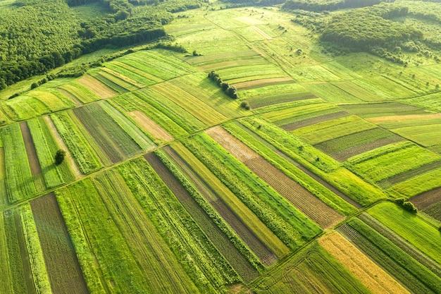 Vista aerea di campi agricoli verdi in primavera con vegetazione fresca dopo la stagione di semina in una calda giornata di sole.