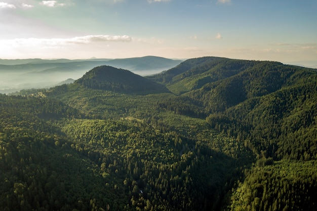 Vista aerea di verdi colline di montagna ricoperte di foreste di abeti rossi sempreverdi in estate.