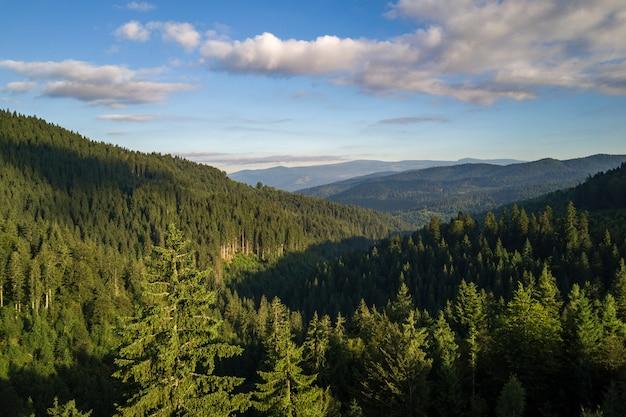Vista aerea delle colline verdi della montagna coperte di foresta attillata sempreverde di estate.