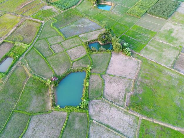 Vista aerea delle risaie verdi natura fattoria agricola sfondo, vista dall'alto campo di riso dall'alto con pacchi agricoli percorso di diverse colture in verde e stagno d'acqua, vista a volo d'uccello