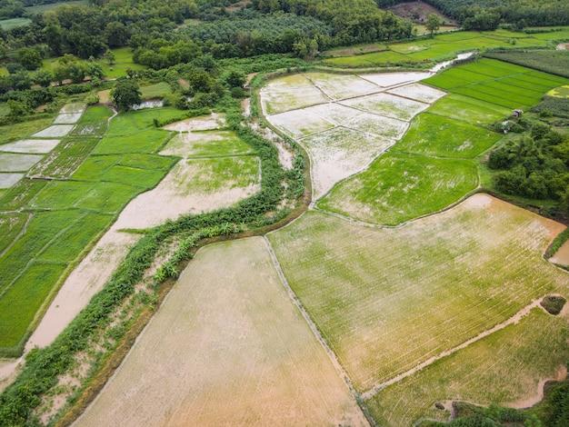 Vista aerea dei campi di riso verdi natura fattoria agricola sfondo, vista dall'alto campo di riso dall'alto con pacchi agricoli percorso di diverse colture nei campi della stagione delle piogge, vista a volo d'uccello