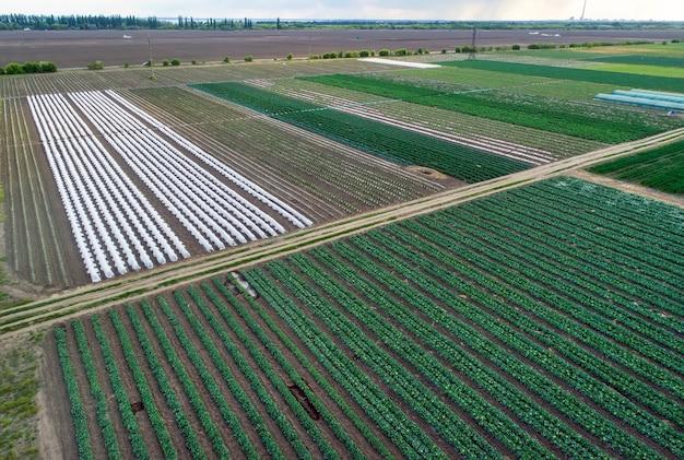 Vista aerea della serra e dei campi di ortaggi in una piccola area agricola. campo agricolo dall'alto.