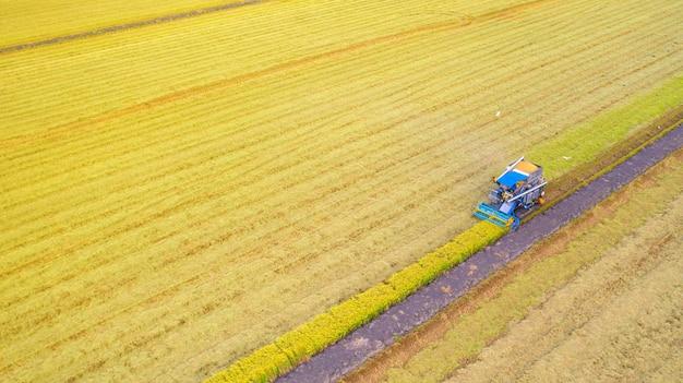 Vista aerea della macchina della mietitrice che funziona nel giacimento del riso da sopra