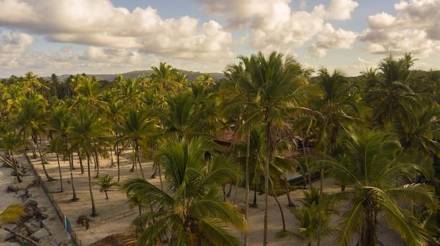 Vista aerea del paesaggio con alberi di cocco sulla costa di ilheus bahia brasile.