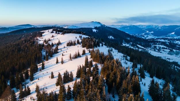 Vista aerea di ipnotizzante paesaggio pittoresco di esili abeti alti che crescono sulle colline innevate