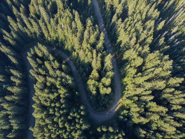 Vista aerea sulla strada di montagna che attraversa il paesaggio forestale
