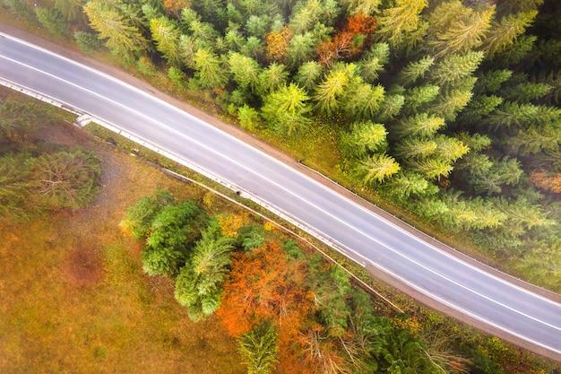 Vista aerea og strada sinuosa tra la foresta sempreverde con alberi di pino verdi in montagna d'estate.