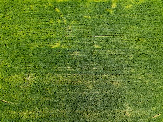 Vista aerea campo piantato in campagna. concetto di attività agricole. foto dal drone