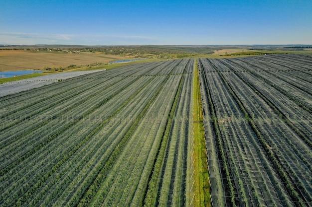 Vista aerea della serra di plastica sul meleto