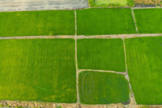 Vista aerea del giacimento del riso Foto Premium