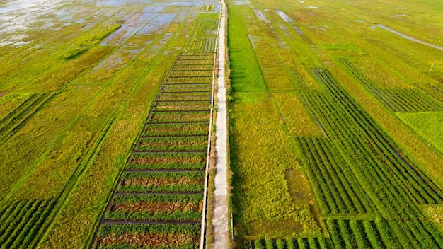 Vista aerea delle risaie sulla rotta meridionale di yogyakarta
