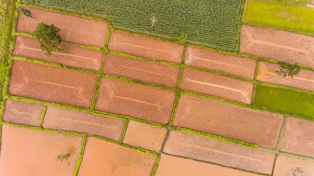 Vista aerea delle risaie in tailandia