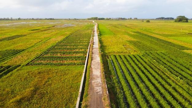 Veduta aerea delle risaie con una strada al centro