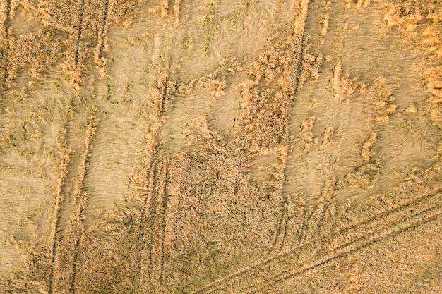 Vista aerea del campo di fattoria maturo pronto per la raccolta con la caduta rotta da teste di grano eolico
