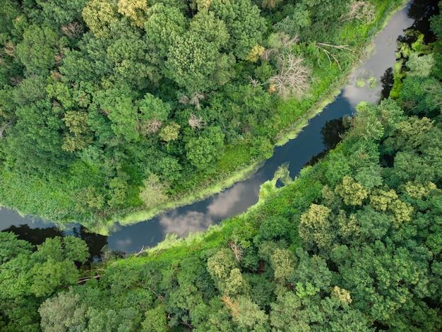 Veduta aerea del fiume che si trova sulla foresta verde. foto del drone