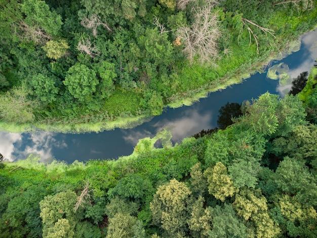 Veduta aerea del fiume che si trova sulla foresta verde.