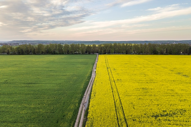 Vista aerea della strada a terra dritta con pozzanghere di pioggia nei campi verdi con piante di colza in fiore su sfondo blu cielo copia spazio. fotografia di droni.