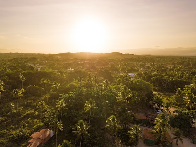Vista aerea del tramonto su alberi di cocco a ilheus bahia brasile.