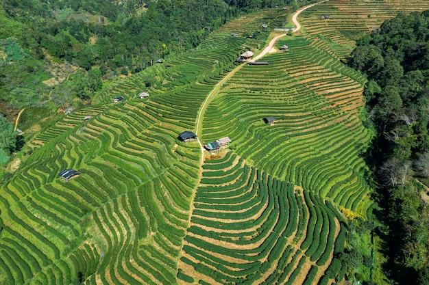 Vista aerea della piantagione di tè a chiang mai, thailandia