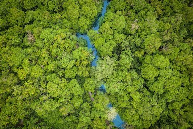 Vista aerea della foresta di mangrovie di tha pom klong song nam